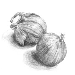 Onion study