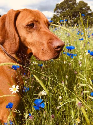 J Culver: Marla in Priory Park meadow