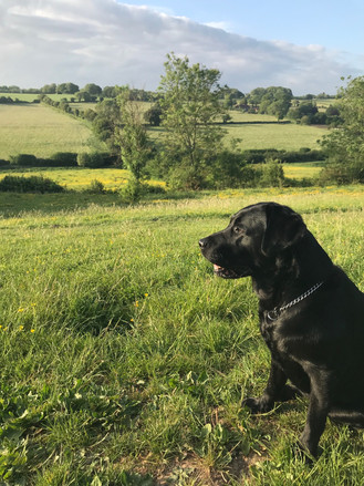 K Tame: Nellie resting on the way to The Hampshire Bowman