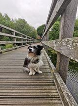 M Davison: Pepper at the pond bridge