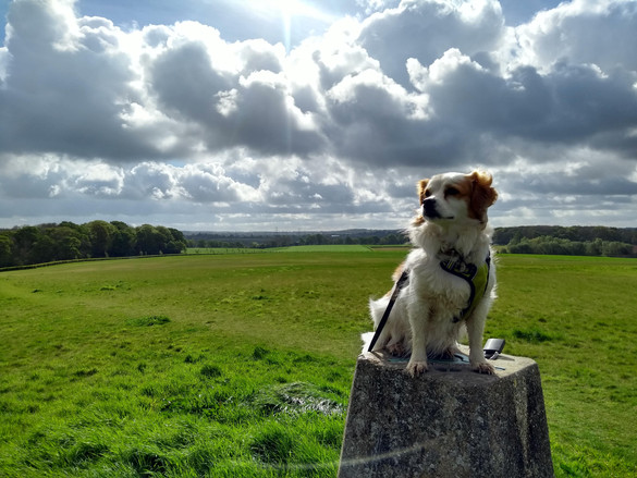 C Staples The Trig point between BW and Durley