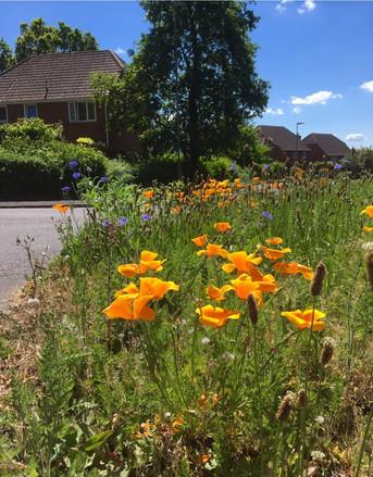 D Robinson Cricklemeade roundabout wild flowers