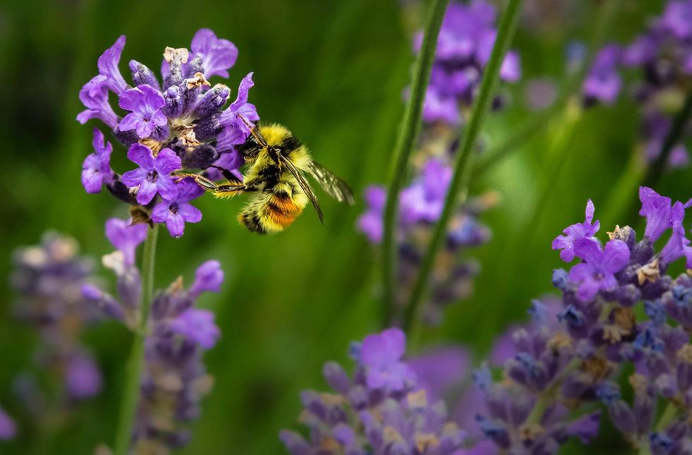 jenna-lee-bees-web.jpg