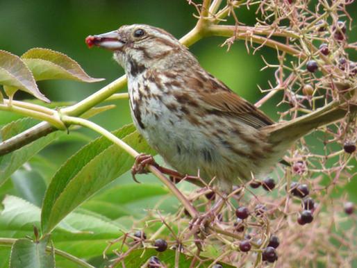 Bird Watching Station