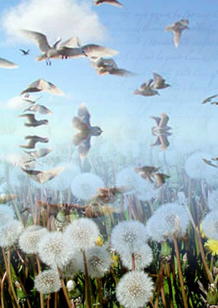 Fly away, little seedlings