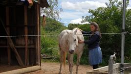 Vertrauen in der osteopathischen Pferdetherapie