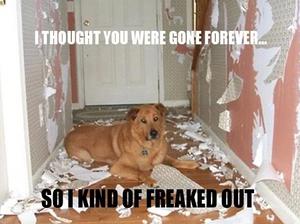Dog separation anxiety groundedpsychic.com