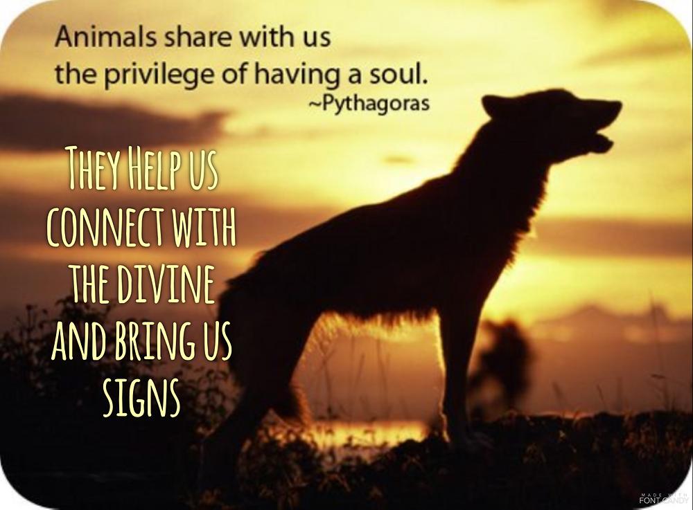 groundedpsychic.com animal signs
