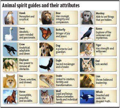 Animal Spirit Guides  groundedpsychic.com