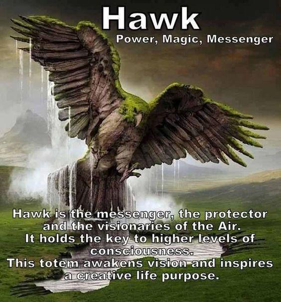 Hawk Spirigt Guide