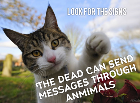 Animal Signs Sent from Your Loved Ones