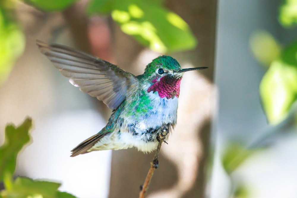 Hummingbirds can come as messengers from spirit.