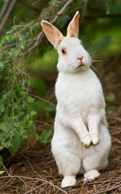 White Rabbit as a sign from spirit. groundedpsychic.com