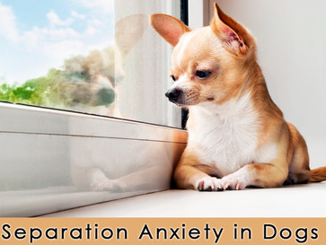 Doggie Separation Anxiety