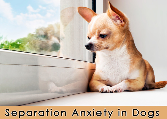 Separation Anxiety in Dogs. groundedpsychic.com
