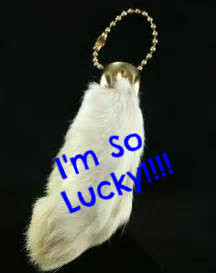 Is My Rabbit's Foot Really Lucky?  Charms, Talismans, & Amulets