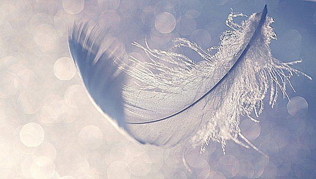 Lighten Up! Feather from Spirit. groundedpsychic.com