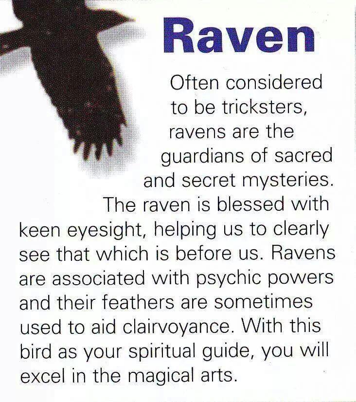 Raven Spirit Gude