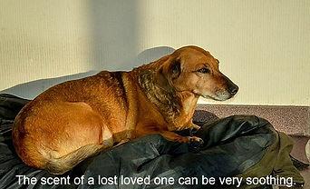 Pet Psychic groundedpsychic.com