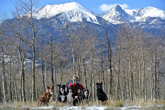 Happy Dogs Enjoying Colorado