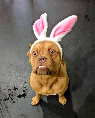 Easter Bunnies Abound at PSFD