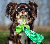Cute dog with sunglasses holds dog bags