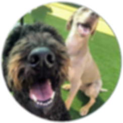 Two dogs smile thinking about PSFD membership