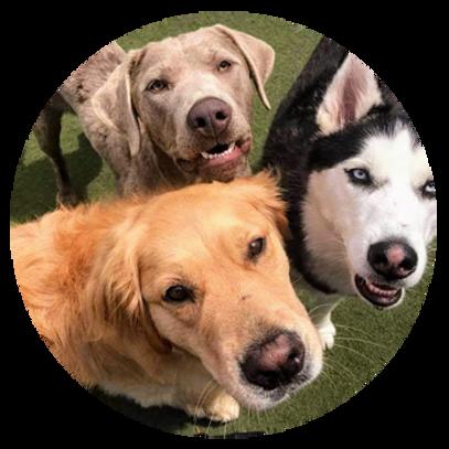 Progressive Boarding dogs smile for camera