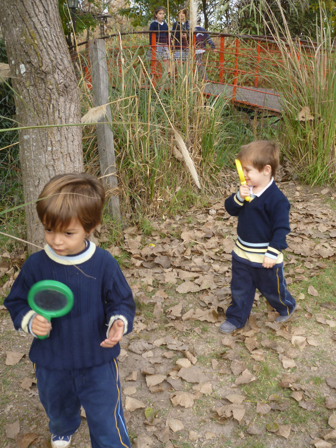 """K3 """"A Tree and Leaf Investigation"""""""