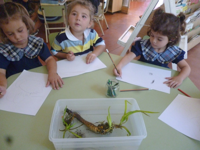 "K4 ""Plants that Float"""