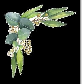 eucalyptus corner.png