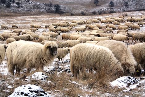 Часть 9-я. Трансильвания (автопутешествие в Румынию в новогодние каникулы 2015-2016).  Обратная доро