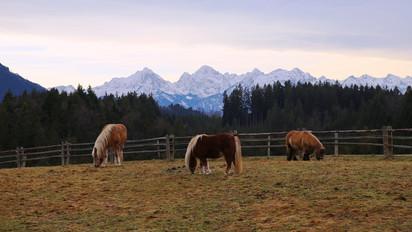 Сказочная Бавария. Зимние каникулы 2017-2018. Коротко о главном.