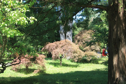 Удивительная Грузия. Ботанический сад Батуми.