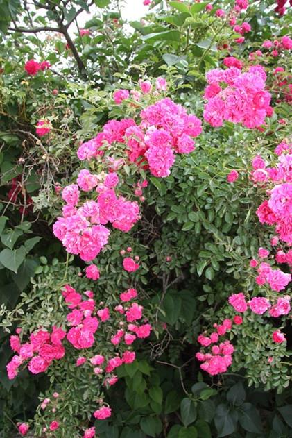 Мраморные розы Осташков памятник с ангелом Мегион