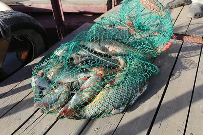 Удивительное путешествие на ... рыбалку. Сентябрь 2020. Коротко о главном.