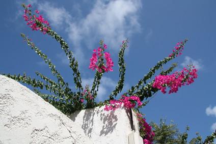 Остров Крит. Часть 1-я. Каврос, Ретимно