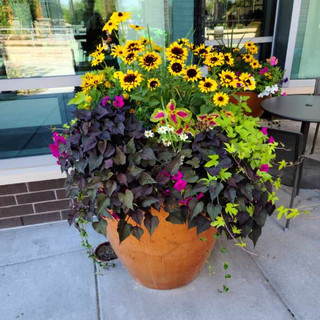 Flowers in exterior container.jpeg