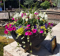 Annuals in flower pot.jpg