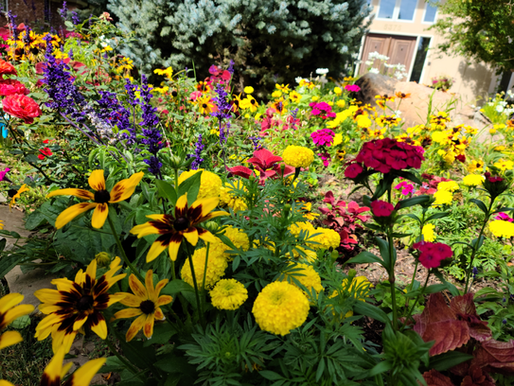 Planting Annuals for Success