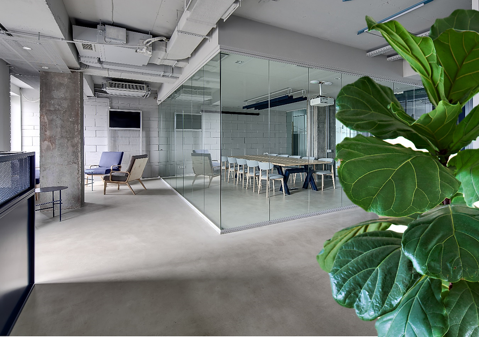 Office Space with Ficus Lyrata_2.png