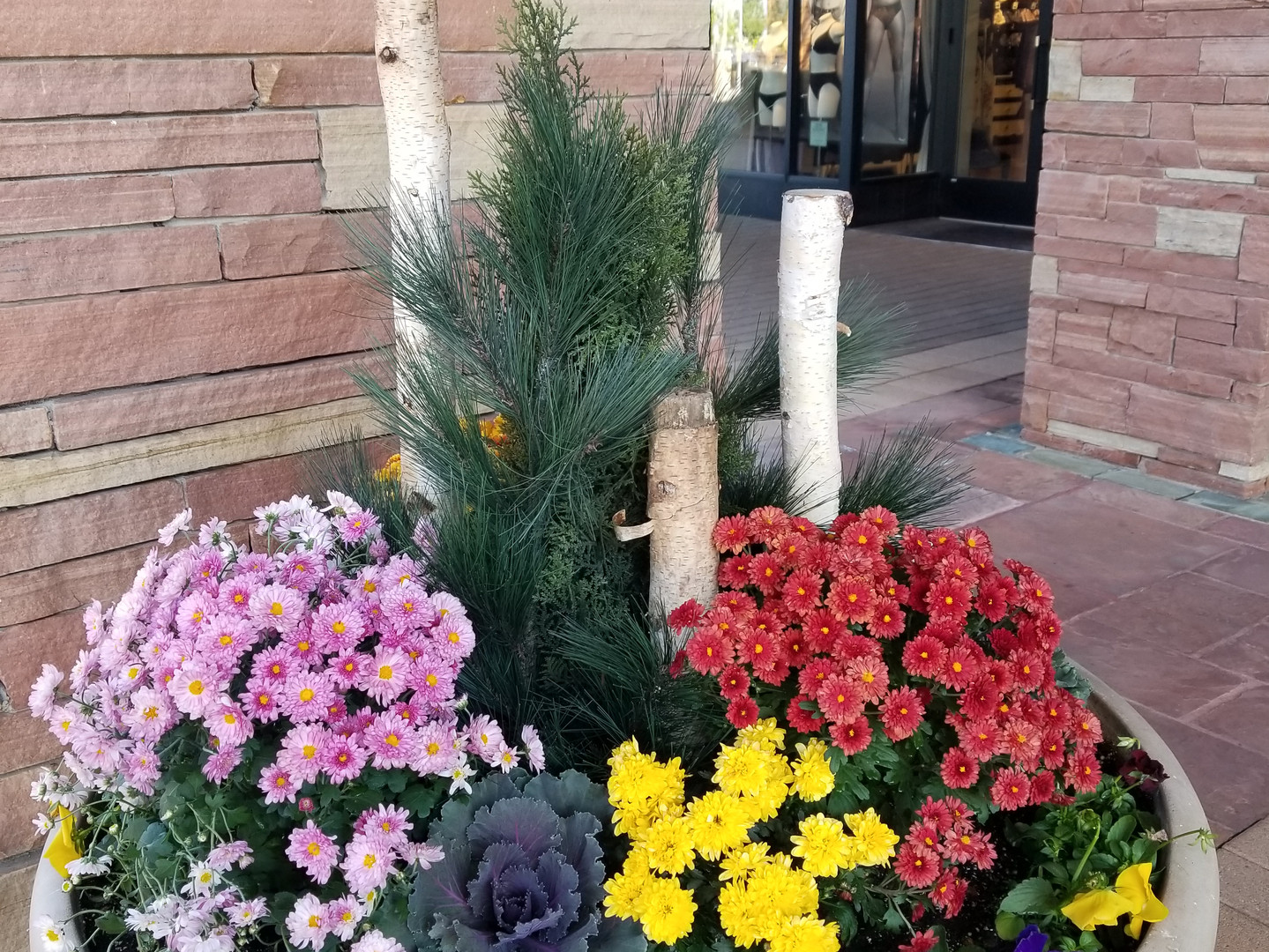 Fall Annuals Park Meadows Mall.jpg