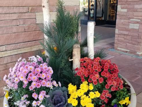 Fall Annuals Park Meadows Mall.jpg