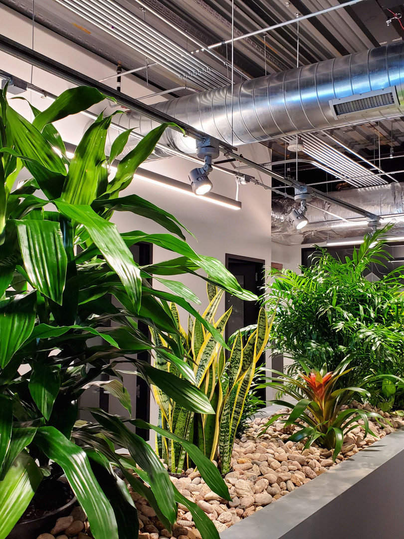Raised Interior Planter with Tropical Pl