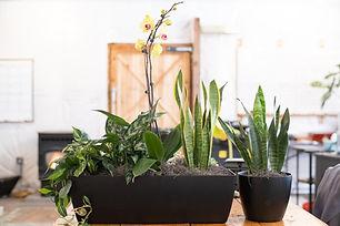 Office Plants.jpg