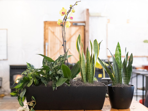 Houseplants: The What, Where, And Why Guide