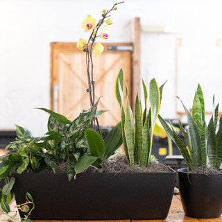 Office Plants Denver CO.jpg