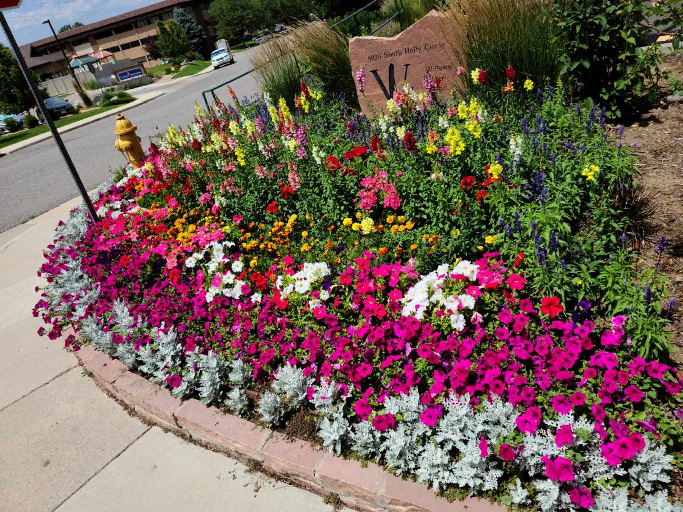 Annuals @ Willows Water District'.jpeg
