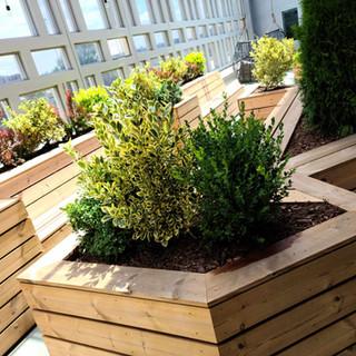 Perennials on rooftop deck.jpeg