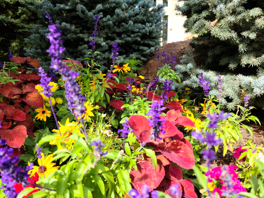 Plant Escape's HOT LIST – Top Garden Trends for 2018!
